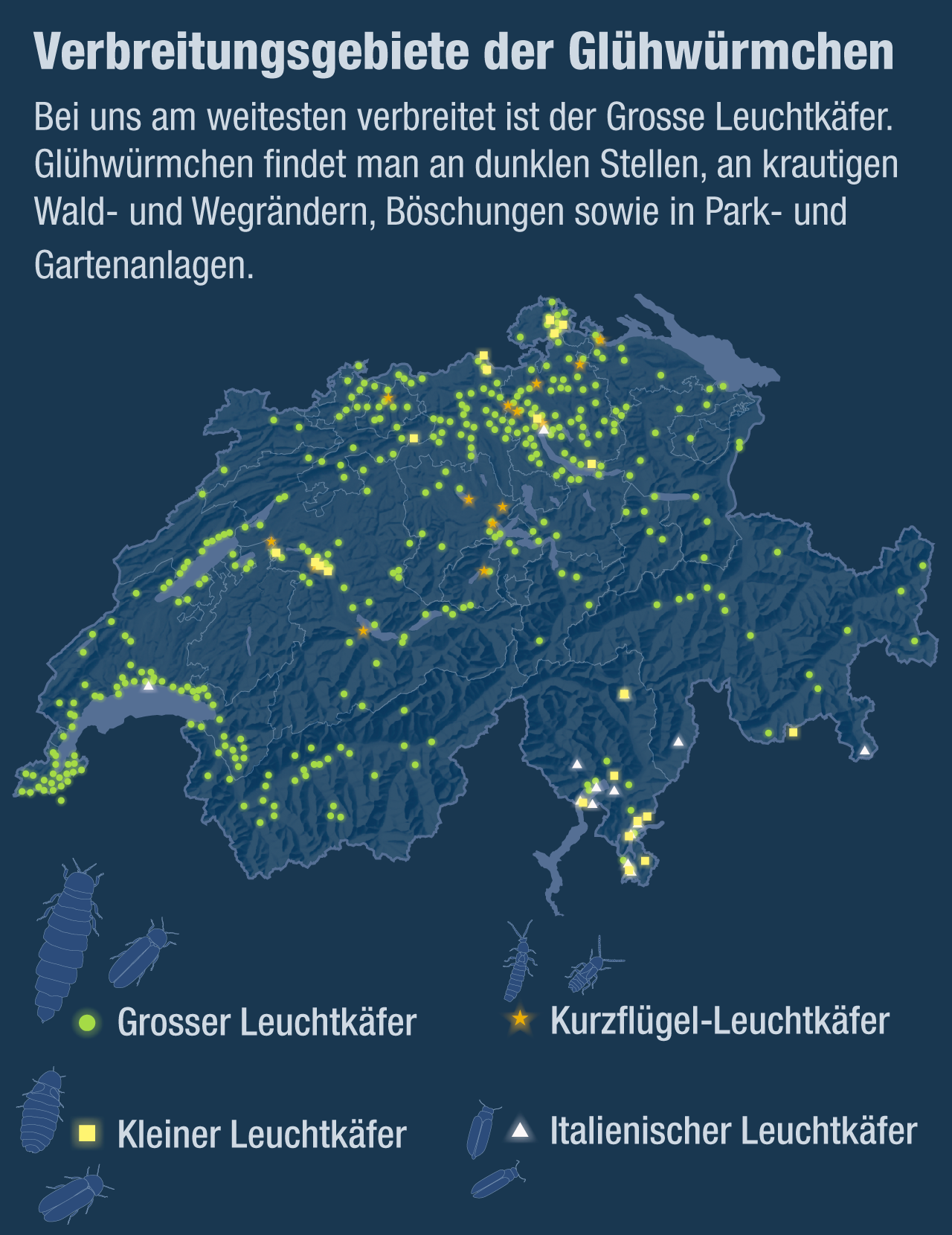 Lichtverschmutzung Karte 2019.Gluhwurmchen Das Tier Des Jahres 2019 Blick Ch